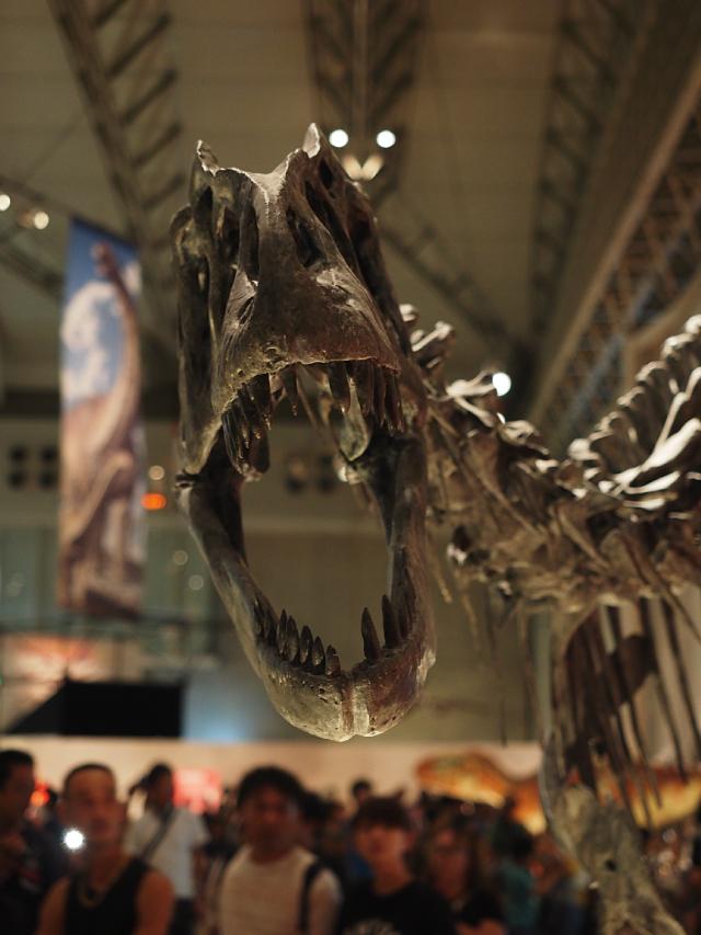 8_アロサウルス.jpg