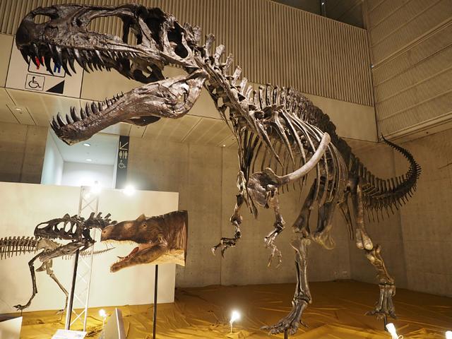 9_アクロカントサウルス.jpg