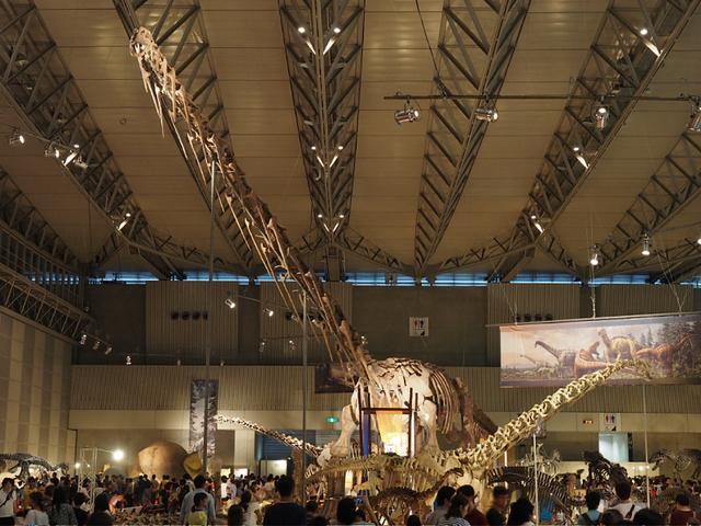 0_ルヤンゴサウルス.jpg