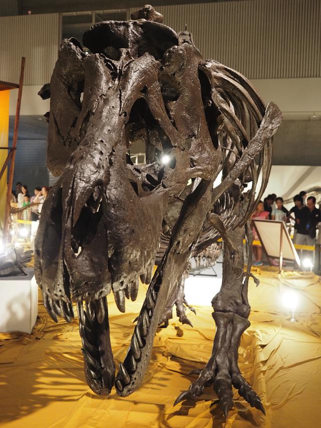 12_ティラノサウルス.jpg