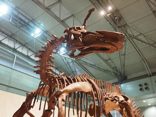 4_チンタオサウルス.jpg